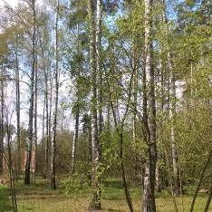 Лесной участок, КП Малое Сареево