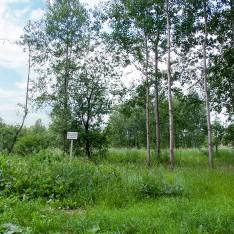 Участок №13 в поселке Малое Сареево